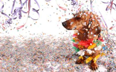 Wau-wau, Helau! 4 Tipps für Hundehalter in der Karnevalszeit