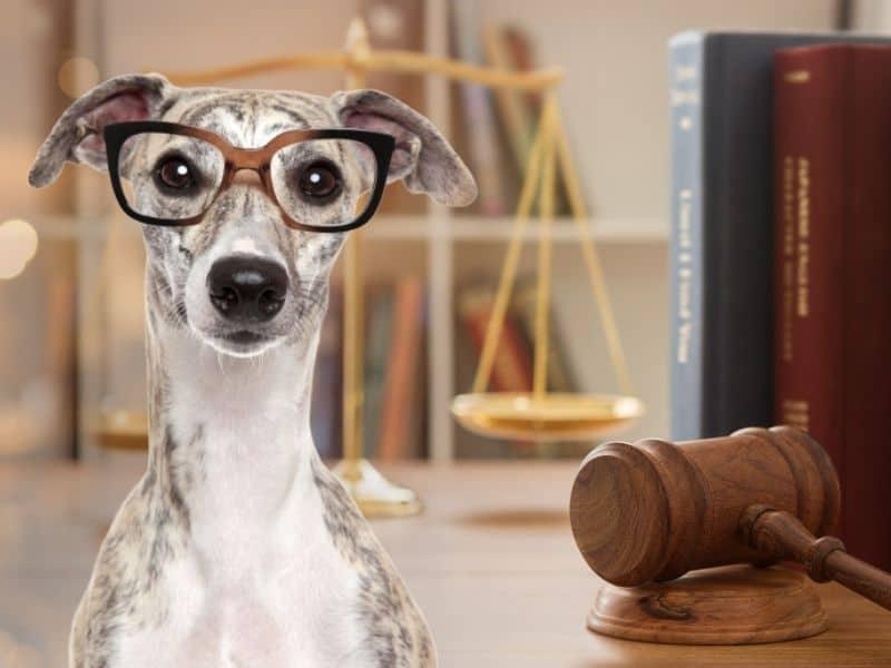 Sachkundenachweis und die Erlaubnispflicht nach §11 für Hundesitter und Tiersitter