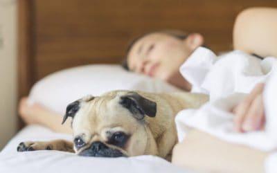 Coronahilfe für Tierhalter –  Tierbetreuung in Zeiten des Coronavirus