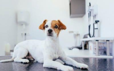 Coronavirus bei Hund & Katze – Gefährlich oder nur Panikmache?