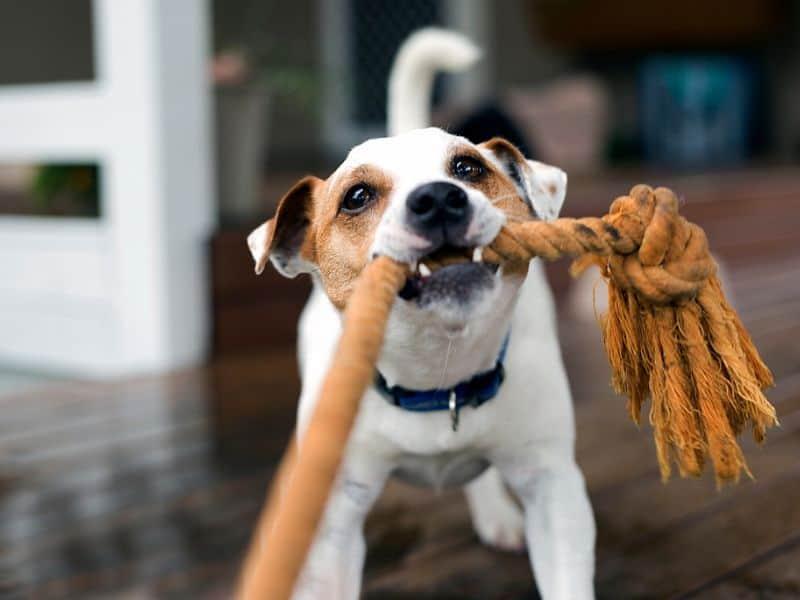 Hundespielzeug selber machen – die 4 besten DIY Spielzeuge für Hunde