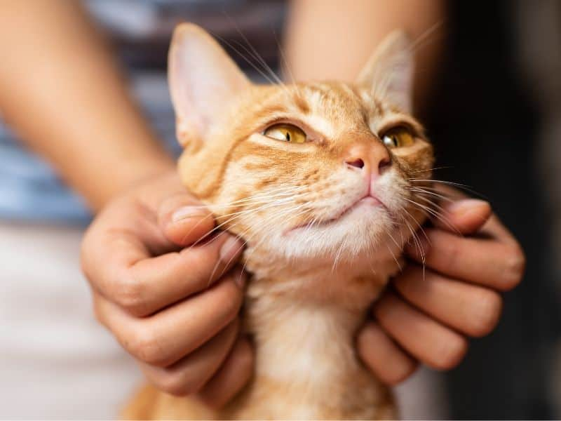 Die 7 faszinierenden Sinne der Katzen – Das steckt in den Stubentigern