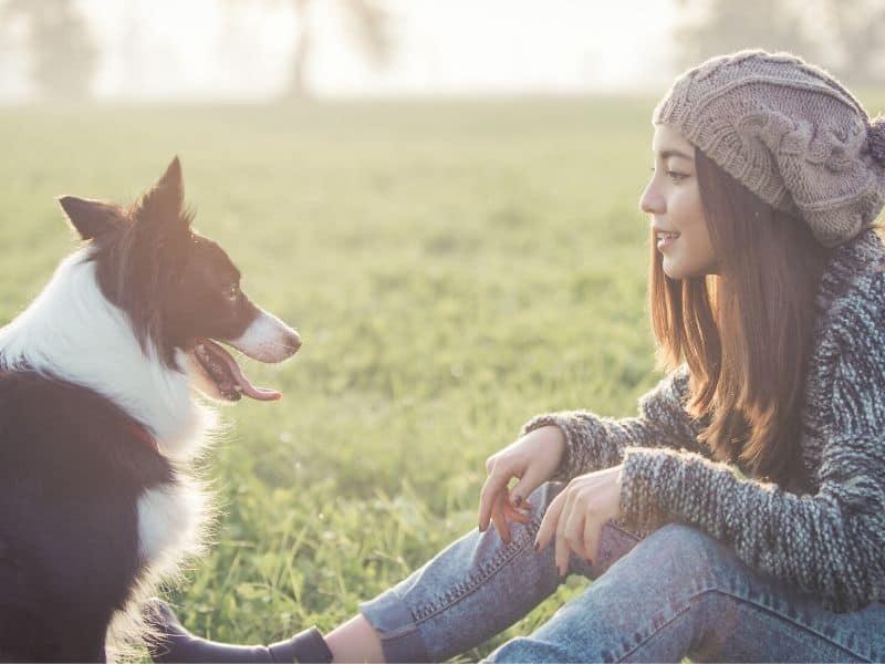 Corona-Maßnahmen für Tiersitter – Gesund & sicher in die Tierbetreuung