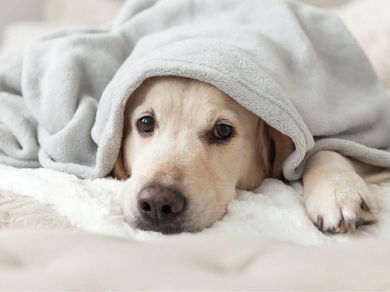 10 Symptome für Hundekrankheiten während der Tierbetreuung