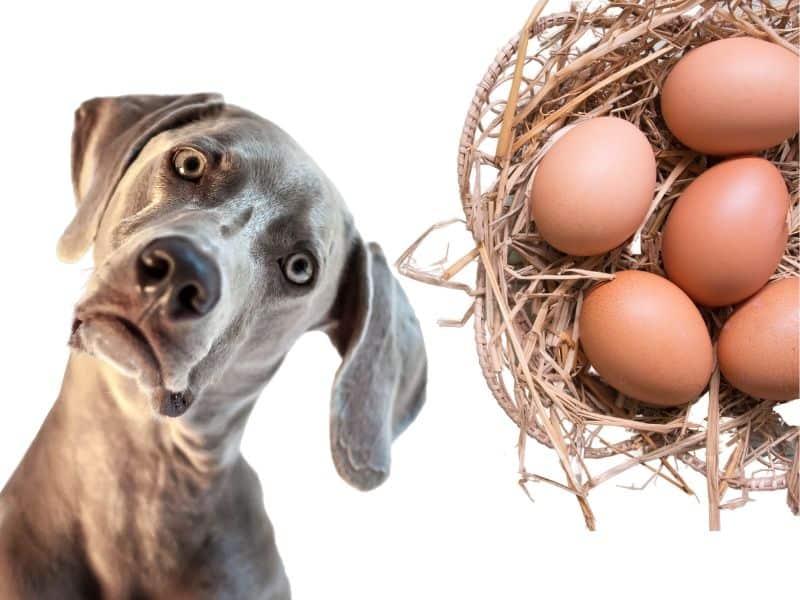 Sind Eier für Hunde wirklich gesund? Das musst du beachten!