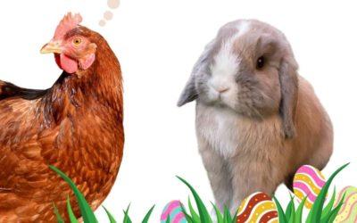Vom eierlegenden Osterhasen und dem Geheimnis der Hennen