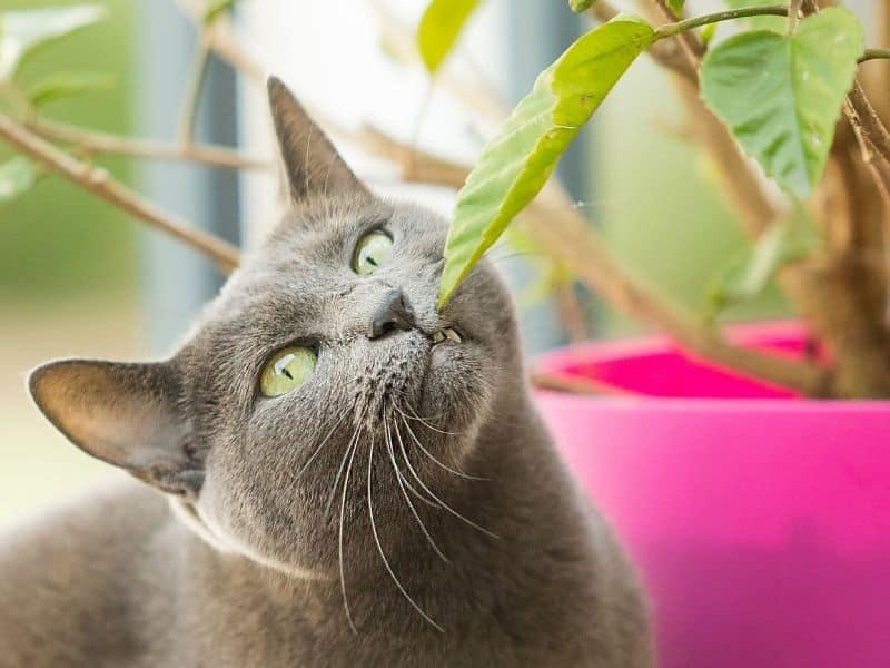 10 ungiftige Zimmerpflanzen für Katzen – hübsch & 100 % ungefährlich