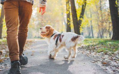Hund entlaufen? Richtig handeln, besser verbeugen & kennzeichnen