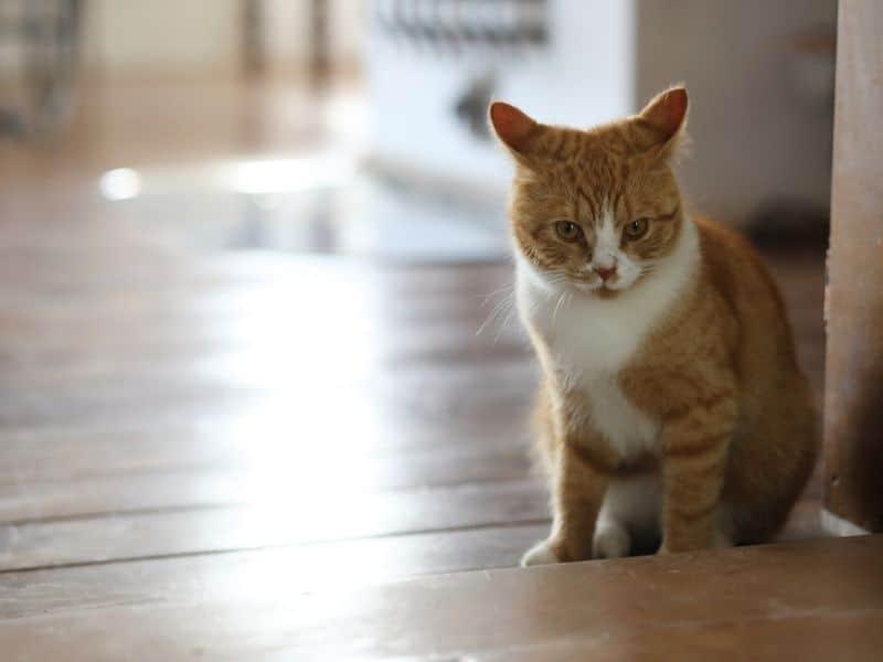Reinigungstipps für Hundebeistzer Katze Tibeo