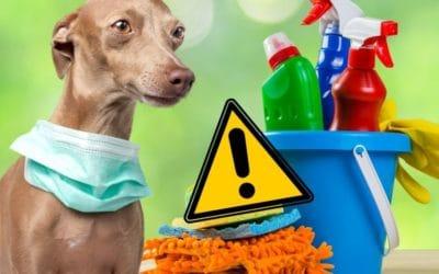 Tierfreundliche Putzmittel, Reinigungstipps & No-Go's für jeden Tierhaushalt & Tiersitter