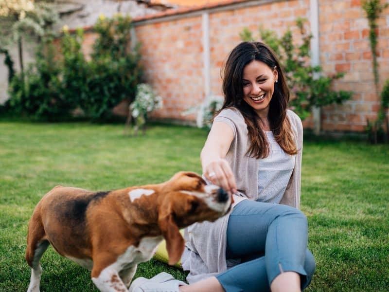 Schäm dich, Küsschen & Verbeugen – 7 süße Hundetricks für Fortgeschrittene