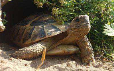 Schildkröten Urlaubsbetreuung? Diese 3 Möglichkeiten gibt es