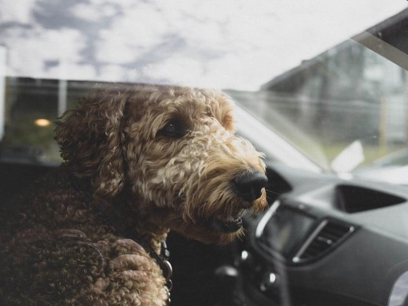 Hund im Auto bei Hitze – die Rechtslage