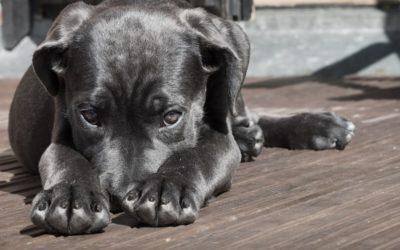 Schreckhafte Hunde – das kannst du tun